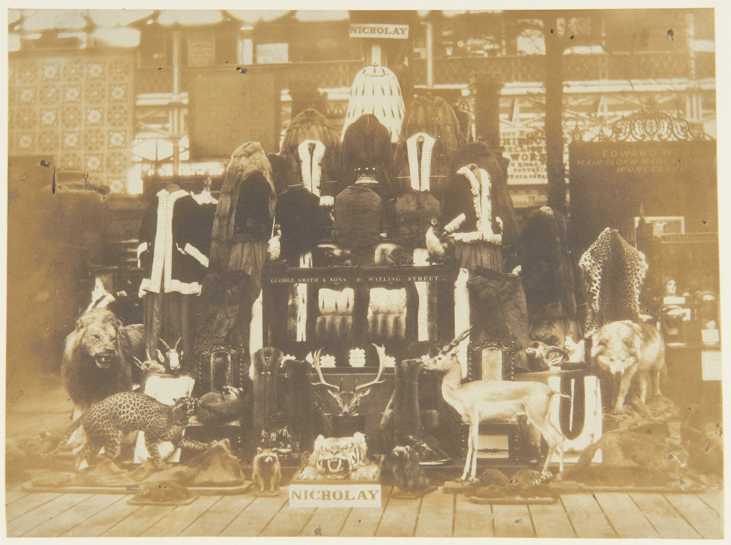 Photograph showing a collection of furs and taxidermy assembled by Nicholay and Son, London and exhibited at the Great Exhibition by Claude-Marie Ferrier, 1851.