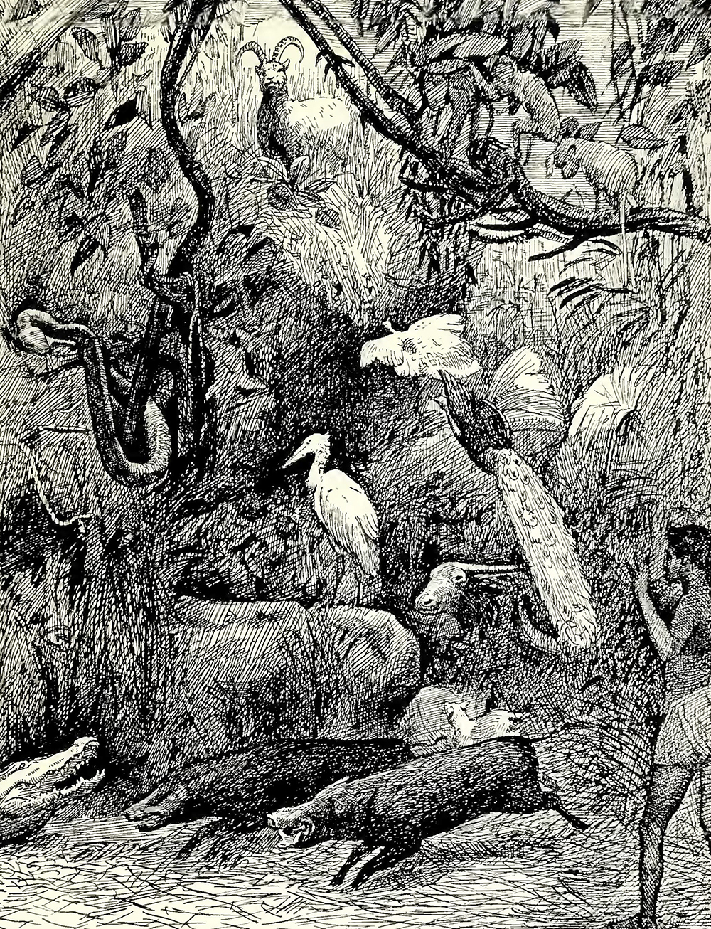 'Indian Jungle Life' – a sketch of Rowland Ward's 'Jungle' display in Cundall's Reminiscences of the Colonial and Indian Exhibition, 1886.