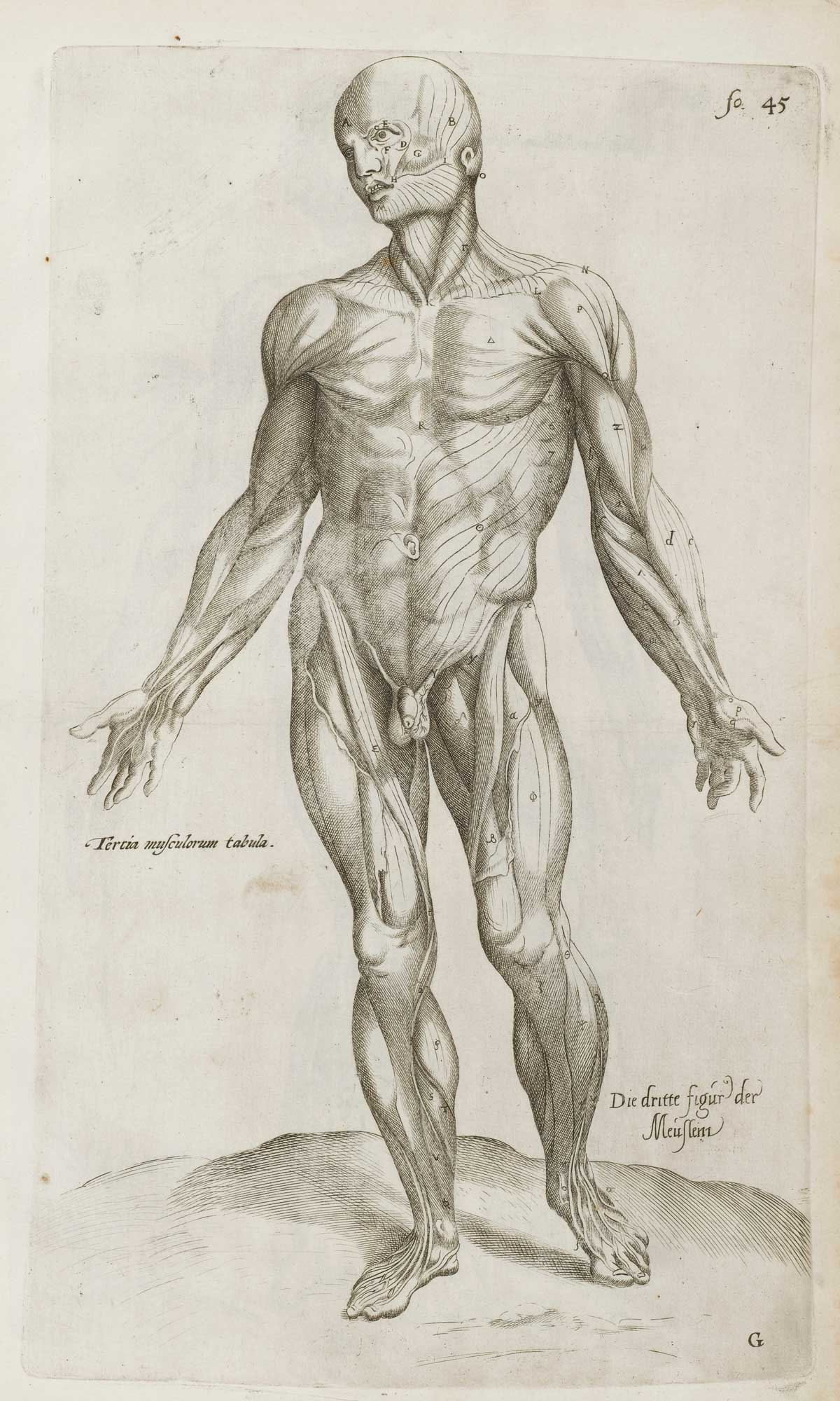 Vesalius, 'De Humani Corporis Fabrica Epitome'. Wellcome Collection.