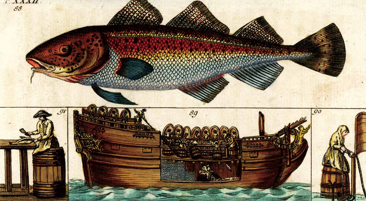 On board a factory ship: gutting, cleaning and storing cod in the hold. Engraving from Encyclopedia of Natural History, Augsburg, 1804 © Bridgeman Images.