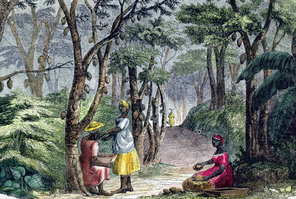 Cocoa plantation on Grenada, 18th century © Bridgeman Images.