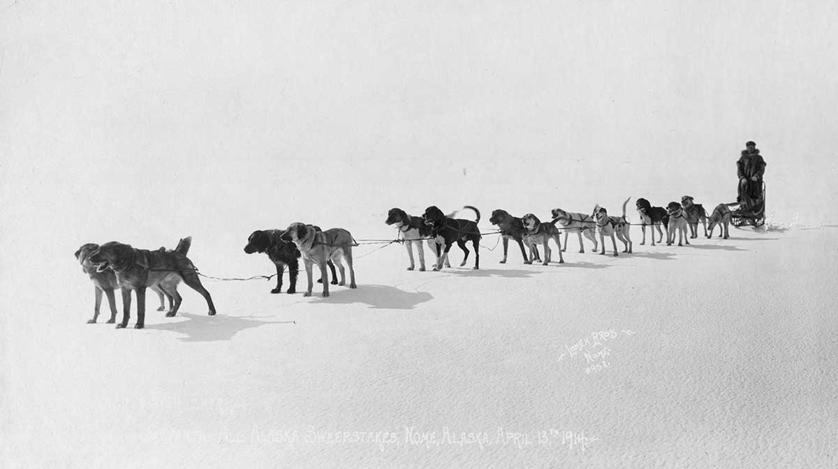 Dog team at Seventh All Alaska Sweepstakes, Nome, April 13, 1914. Library of Congress.