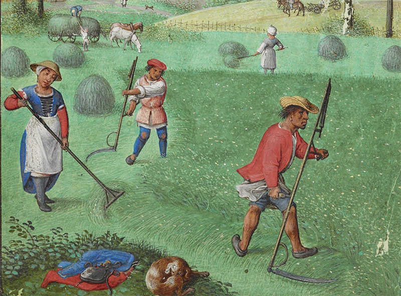 Time stands still: haymaking in July, from the Book of Hours, France, 1510-25.