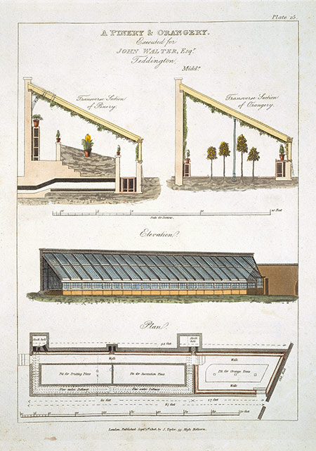A design for a pinery and orangery at Teddington, Middlesex, 1806.