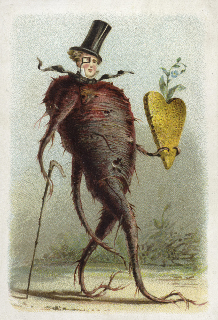 'Beetroot', as depicted in a 19th-century French educational card.