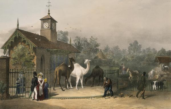 A View of the Zoological Gardens in Regent's Park, London, 1835; showing figures by the camel house to the left and to the right a pen filled with sheep, goats and a zebra. From the Collection of the Museum of London.