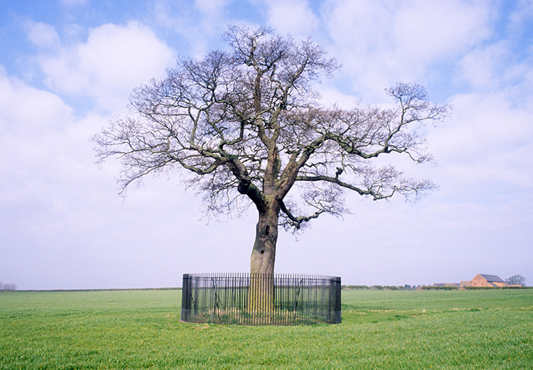 The Royal Oak History Today