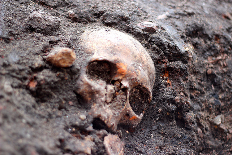 A skull at the Crossrail dig, London