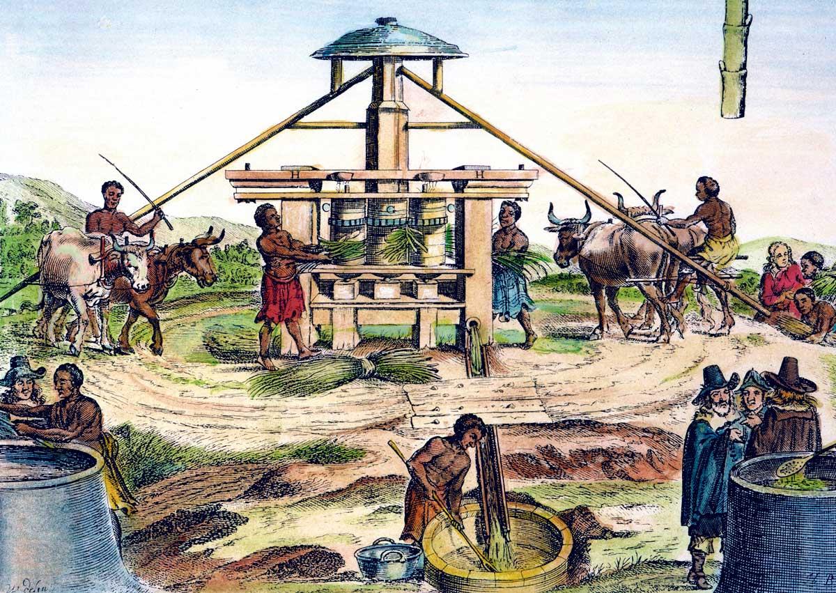 Dutch Slave Trade