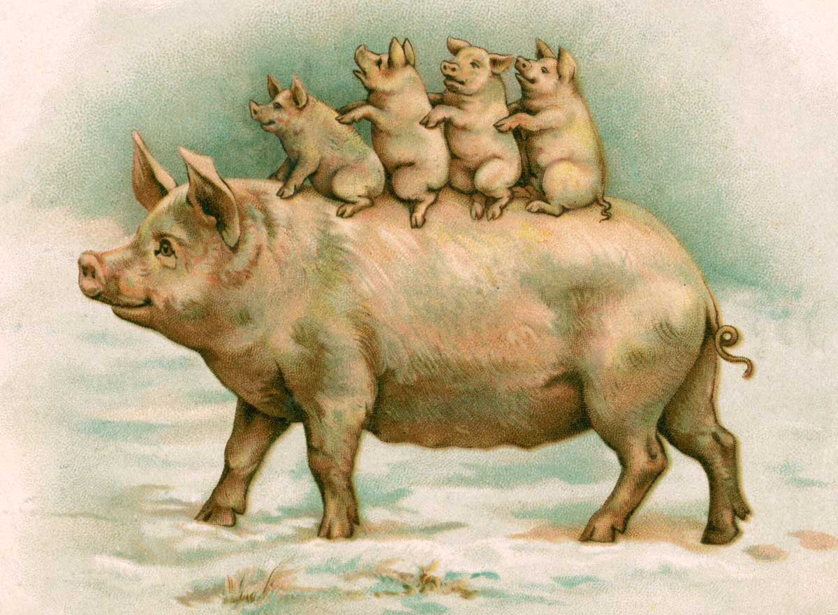 'Four Piglets Riding on Their Mother's Back', English illustration, 1898 © Bridgeman Images.
