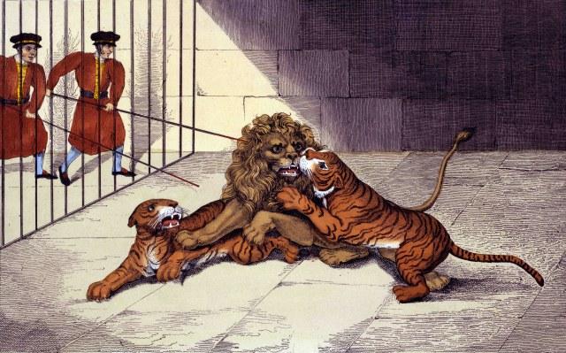 EvC Forum: LION vs TIGER