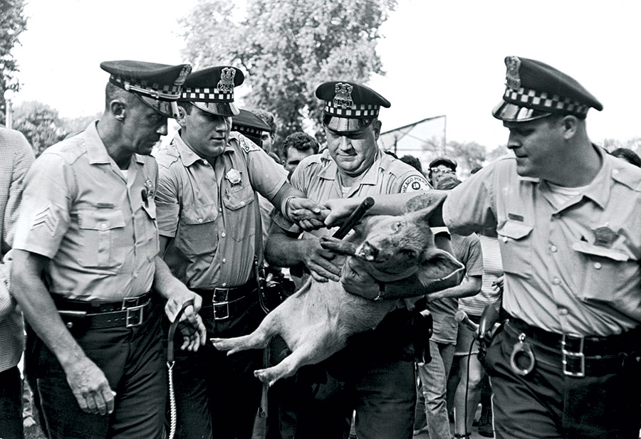 Pigasus, the 'Presidential Candidate' for the Youth International Party, is 'arrested' in Chicago, 23 August 1968.