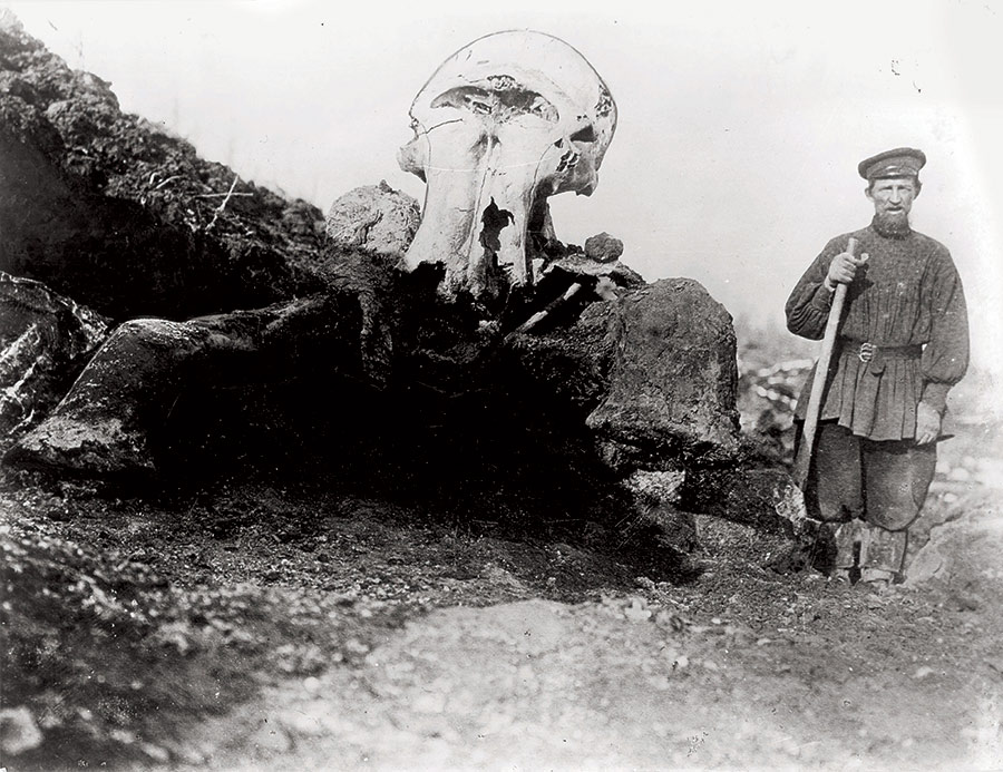 Remains of the Berezovka Mammoth, 1901.