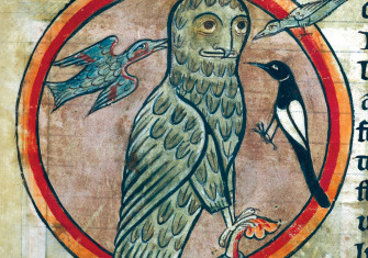 Not so wise: an owl is mobbed by smaller birds, from an English bestiary, 1230-40.