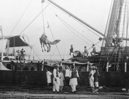 Unloading camels at Port Augusta, c.1893. State Library of South Australia, B 68916