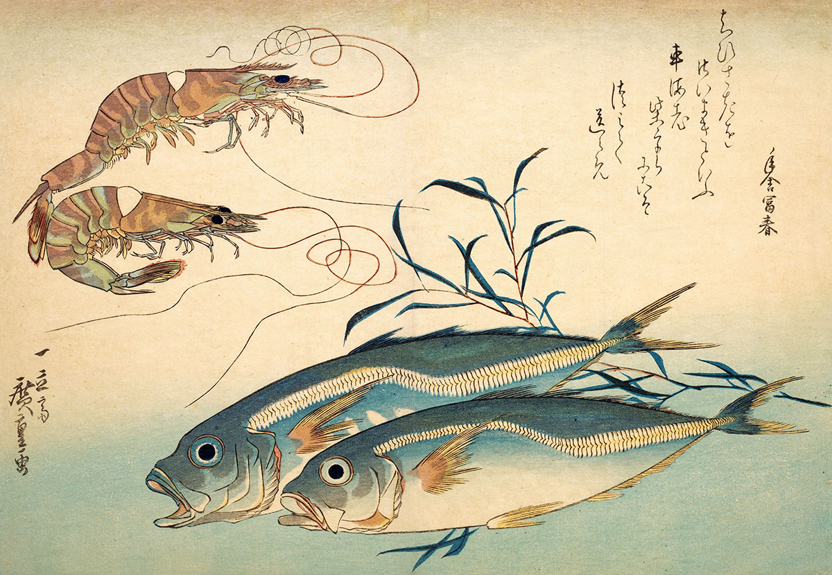 Horse mackerel and tiger prawns in a print by Horishige, 19th century.