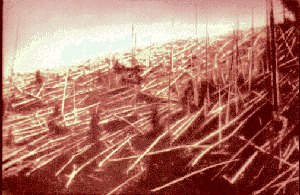 Fallen trees at Tunguska in 1927